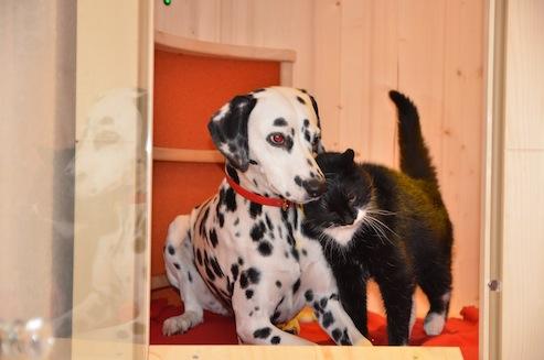 Hydrosoft Royal Cat and Dog