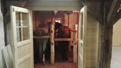 Sauna, Sole, Infrarot für die Behandlung von Pferden